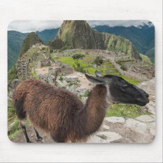 Llama At Machu Picchu, Aguas Calientes, Peru Mouse Pad
