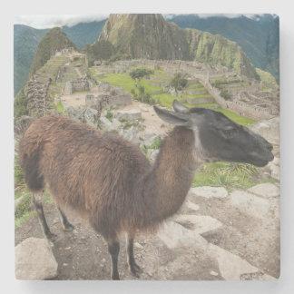 Llama At Machu Picchu, Aguas Calientes, Peru Stone Coaster