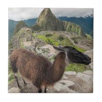 Llama At Machu Picchu, Aguas Calientes, Peru Tile