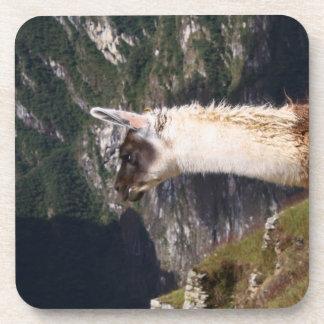 Llama at Machu Picchu Coaster