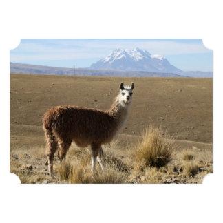 Llama at Snow Mountain - Illimani, Bolivia Card
