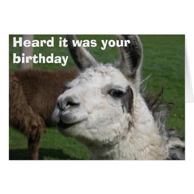 Llama birthday card Zazzlecom