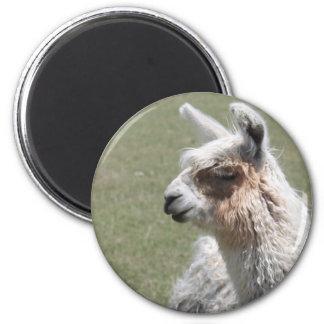 Llama Blush 2 Inch Round Magnet