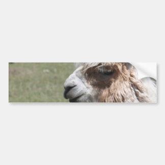 Llama Blush Bumper Sticker
