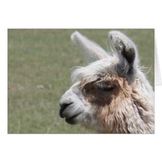 Llama Blush Card