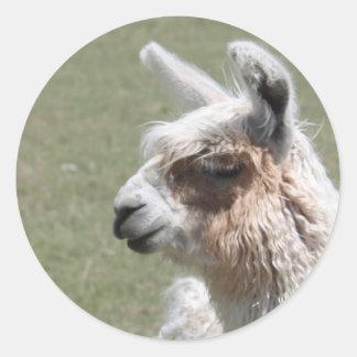 Llama Blush Classic Round Sticker