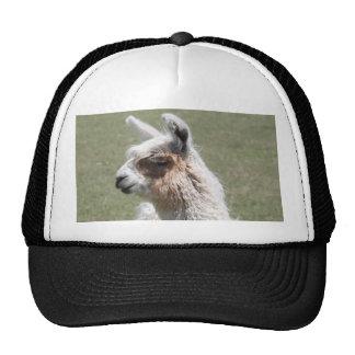 Llama Blush Trucker Hat