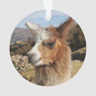 Llama Brown Close up Head