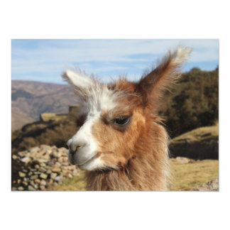 "Llama Brown Close up Head 5.5"" X 7.5"" Invitation Card"