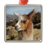 Llama Brown Close up Head Metal Ornament