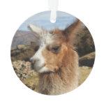 Llama Brown Close up Head Ornament