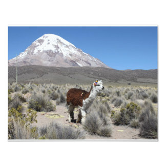 Llama by Snow Sajama Mountain, Bolivia Card