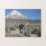 Llama by Snow Sajama Mountain, Bolivia Jigsaw Puzzle