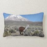 Llama by Snow Sajama Mountain, Bolivia Lumbar Pillow