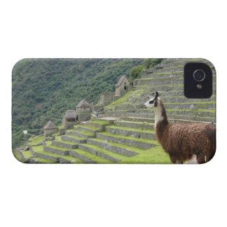 llama Case-Mate iPhone 4 case