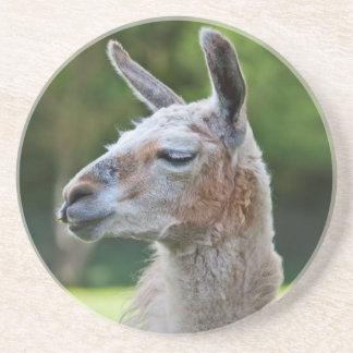 Llama Coaster