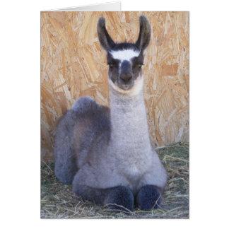 Llama Cria - blank Card