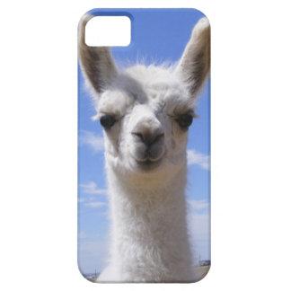 Llama Cria del lirio iPhone 5 Carcasas