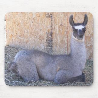 Llama Cria Mouse Pad