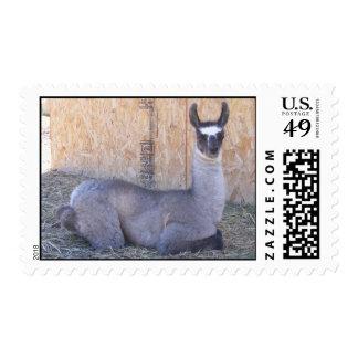 Llama cria postage