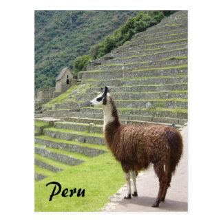 llama de Perú Postales