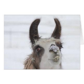 Llama del navidad con nieve en la nariz para los tarjeta de felicitación