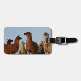 Llama gang luggage tag