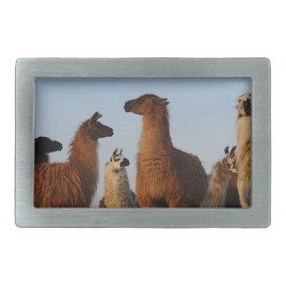 Llama gang rectangular belt buckle