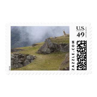Llama (glama del lama) entre las terrazas del inca timbres postales