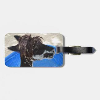 llama hair unkept blue pool farm animal bag tag