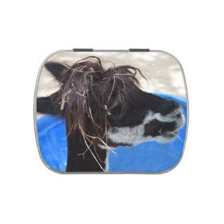 llama hair unkept blue pool farm animal jelly belly tin