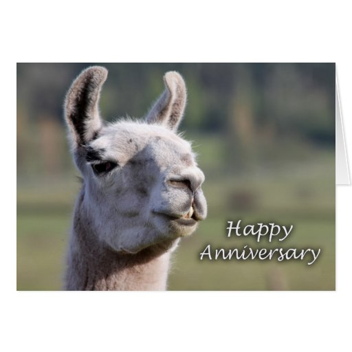 Llama Happy Anniversary  Happy Anniversary llama Cards
