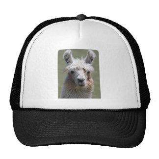 Llama Hats
