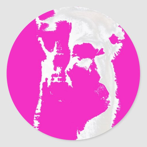 Llama head in pink classic round sticker