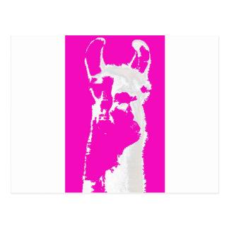 Llama head in pink postcard