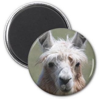 Llama Imán Redondo 5 Cm