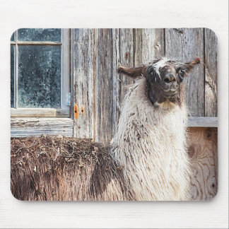 Llama in front of a barn mouse pad
