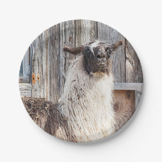 Llama in front of a barn paper plate