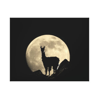 Llama In Full Moon Canvas