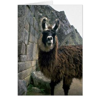 Llama In Peruvian Ruins Greeting Card