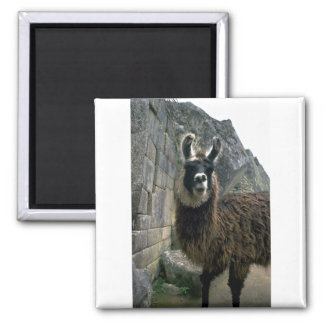 Llama In Peruvian Ruins Refrigerator Magnet