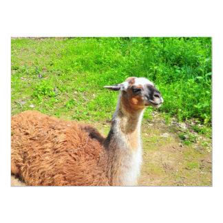 "Llama 6.5"" X 8.75"" Invitation Card"