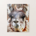 """Llama Jigsaw Puzzle<br><div class=""""desc"""">What could be cuter than a Llama with an attitude?  She&#39;s adorable and she knows it!  From her voluptuous lips to her long,  thick eyelashes.  Diva from head to toe!</div>"""