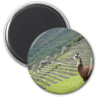 llama lands magnet