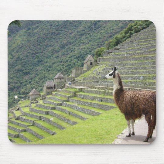 llama lands mouse pad