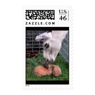 LLama LLove and Bunny Postage Stamps