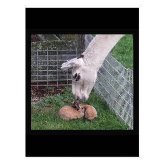 Llama Llove and Bunny Postcard