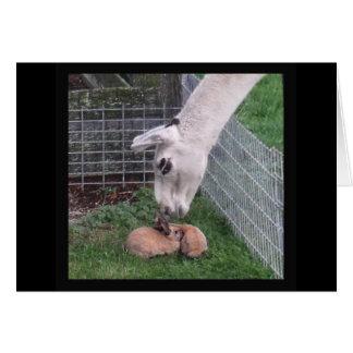 Llama Llove y conejito Tarjeton
