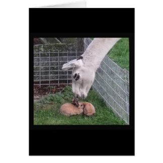 Llama Llove y conejito Tarjetas