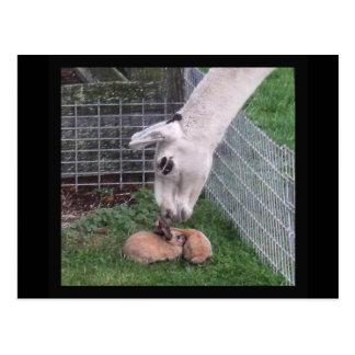 Llama Llove y conejito Postal